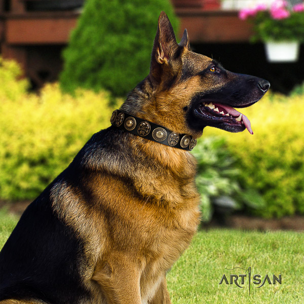 German Shepherd Dog exceptional embellished full grain leather dog collar