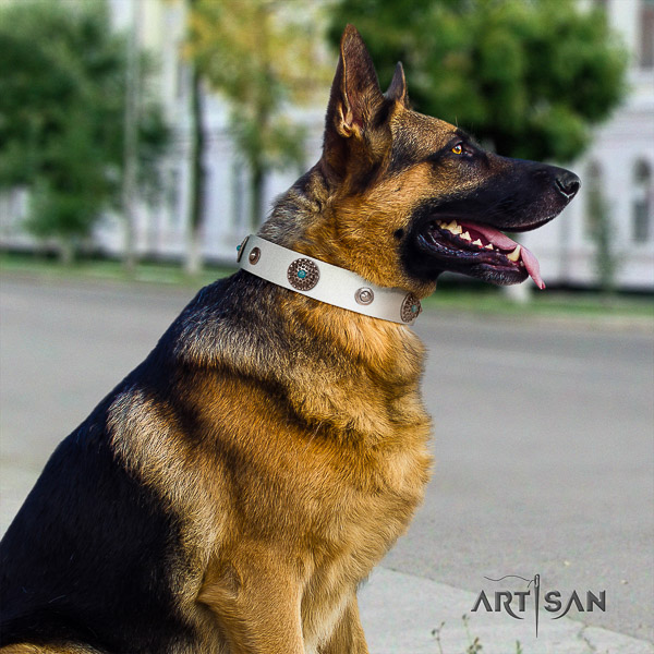 German Shepherd Dog incredible embellished full grain leather dog collar for comfy wearing