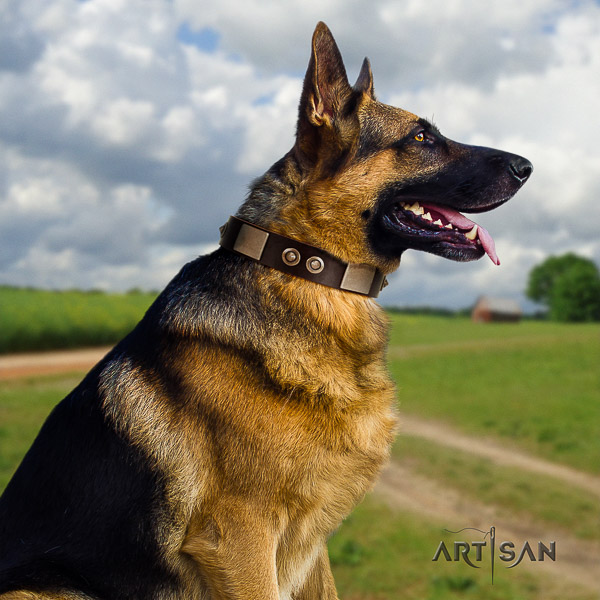 German Shepherd Dog impressive embellished full grain natural leather dog collar