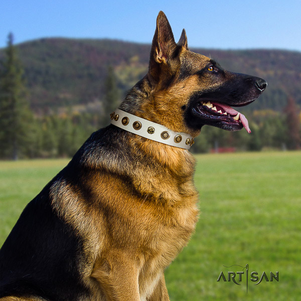 German Shepherd Dog exceptional studded full grain genuine leather dog collar