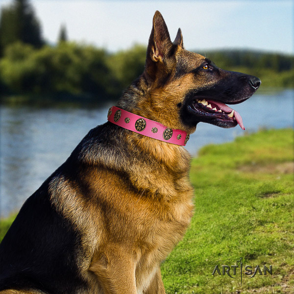 German Shepherd Dog exquisite studded natural genuine leather dog collar
