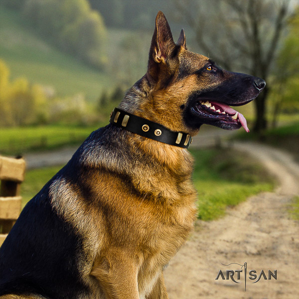 German Shepherd Dog stunning decorated full grain genuine leather dog collar