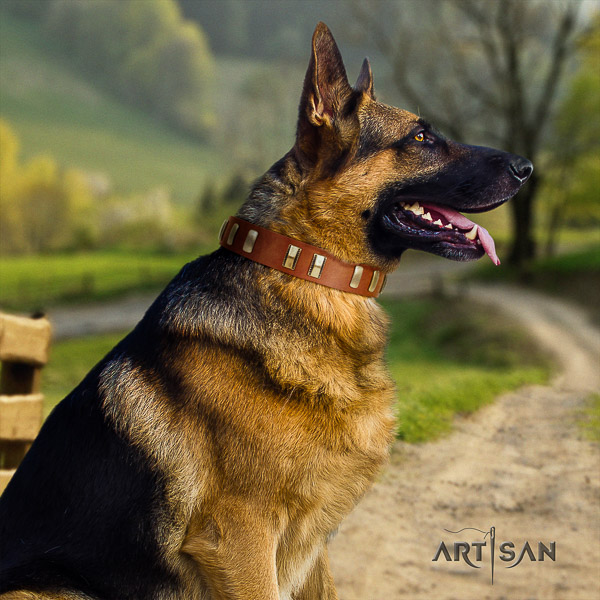 German Shepherd Dog incredible adorned natural genuine leather dog collar
