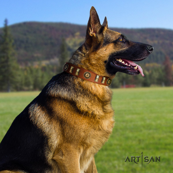 German Shepherd Dog awesome studded full grain leather dog collar
