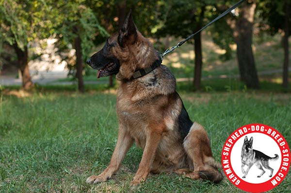Extra Strong Leather Collar for Powerful German Shepherd
