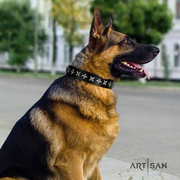 German Shepherd full grain genuine leather dog collar with embellishments for your stylish dog