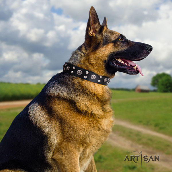 German Shepherd natural genuine leather dog collar with embellishments for your stylish canine