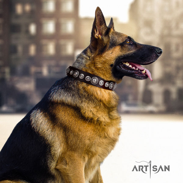 German Shepherd genuine leather dog collar with adornments for your handsome dog