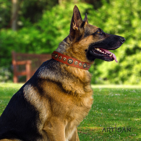 German Shepherd full grain leather dog collar with adornments for your impressive four-legged friend