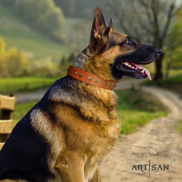 German Shepherd natural genuine leather dog collar with decorations for your impressive canine