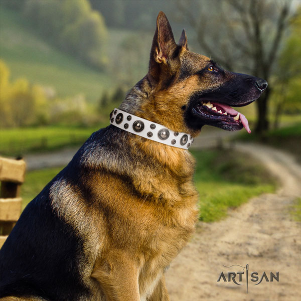 German Shepherd natural genuine leather dog collar with studs for your lovely dog