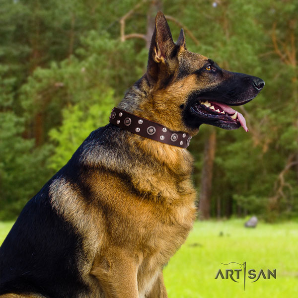 German Shepherd full grain natural leather dog collar with adornments for your attractive dog