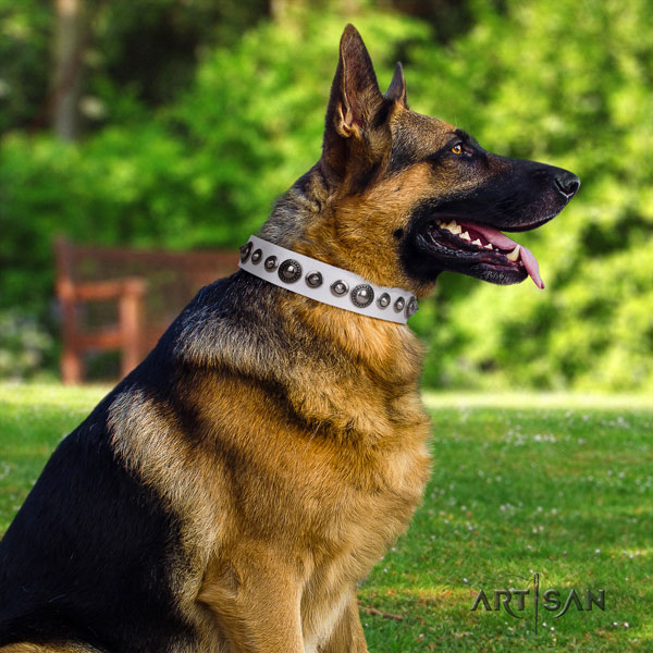 German Shepherd full grain natural leather dog collar with studs for your beautiful pet