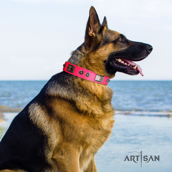 German Shepherd full grain genuine leather dog collar with embellishments for your handsome dog