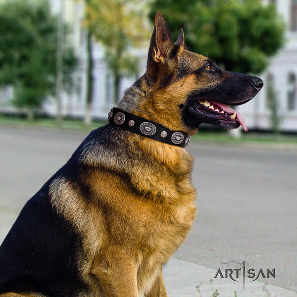 German Shepherd full grain natural leather dog collar with embellishments for your attractive dog