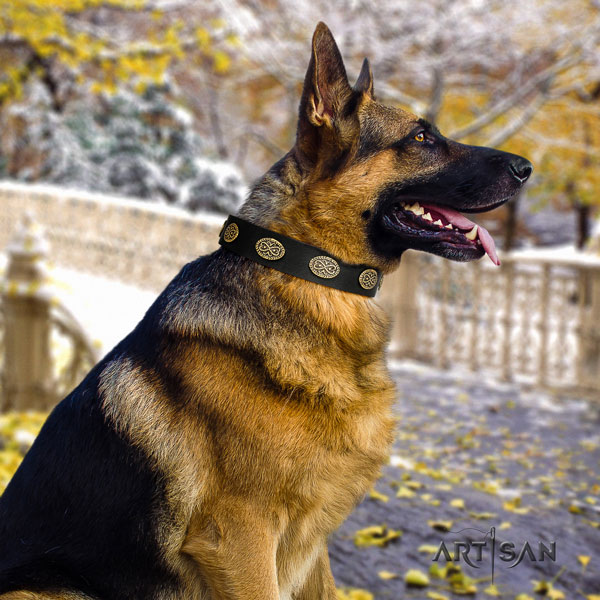 German Shepherd leather dog collar with adornments for your stylish dog