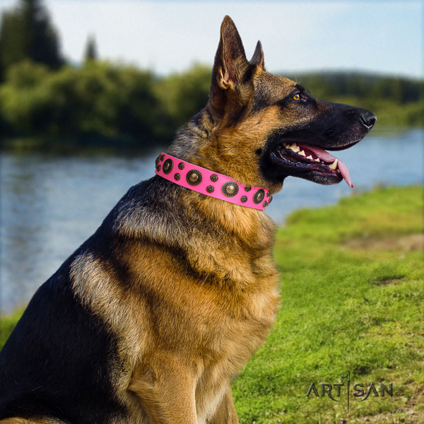 German Shepherd full grain leather dog collar with studs for your stylish canine