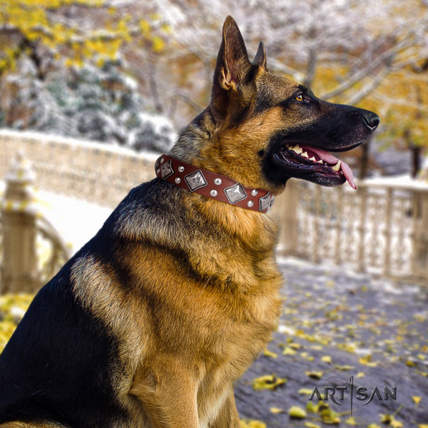 German Shepherd genuine leather dog collar with studs for your handsome dog