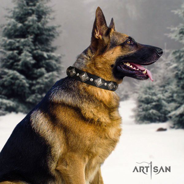 German Shepherd full grain leather dog collar with decorations for your stylish canine