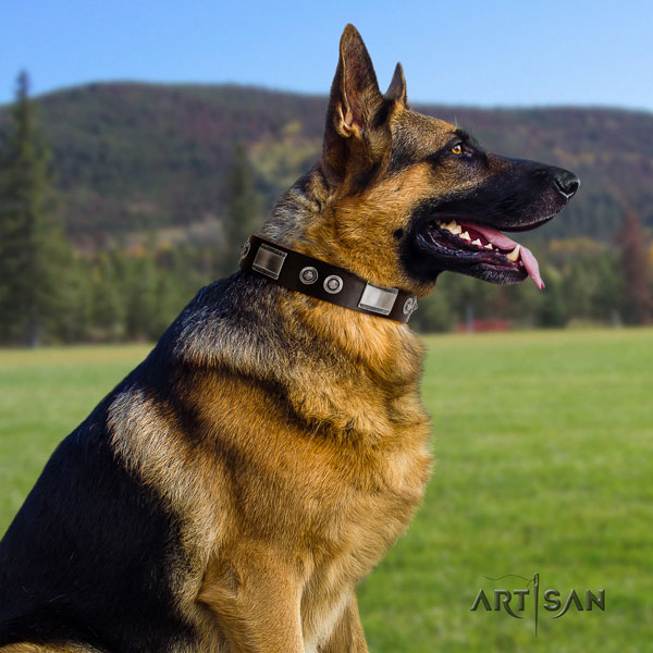 German Shepherd full grain natural leather dog collar with embellishments for your attractive doggie