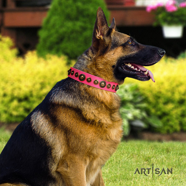 German Shepherd natural genuine leather dog collar with embellishments for your handsome doggie