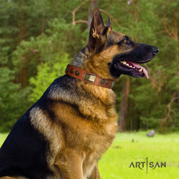 German Shepherd natural genuine leather dog collar with decorations for your impressive four-legged friend