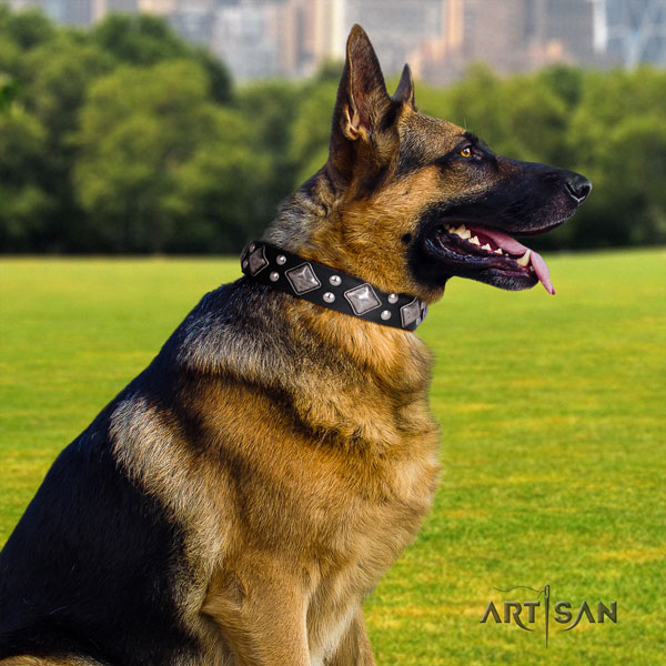 German Shepherd full grain leather dog collar with adornments for your attractive pet