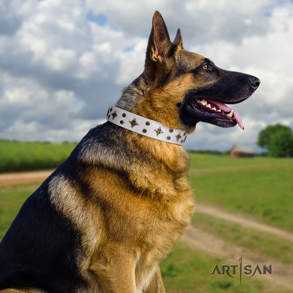 German Shepherd full grain natural leather dog collar with embellishments for your impressive four-legged friend