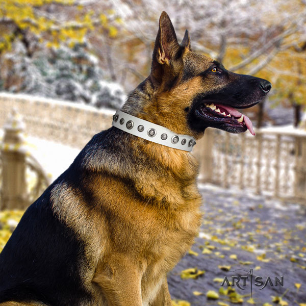 German Shepherd genuine leather dog collar with adornments for your attractive canine
