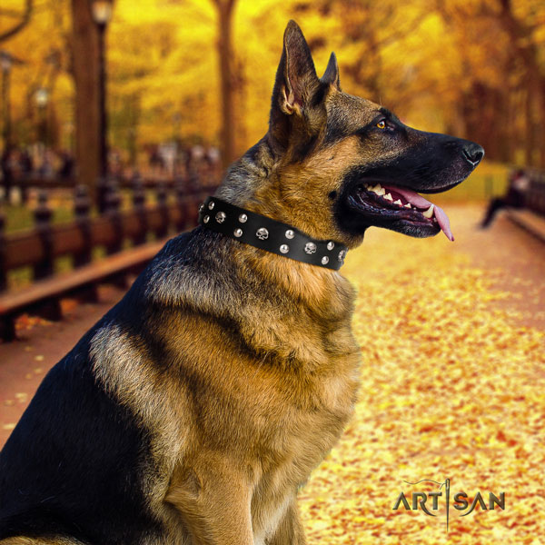German Shepherd leather dog collar with adornments for your handsome pet