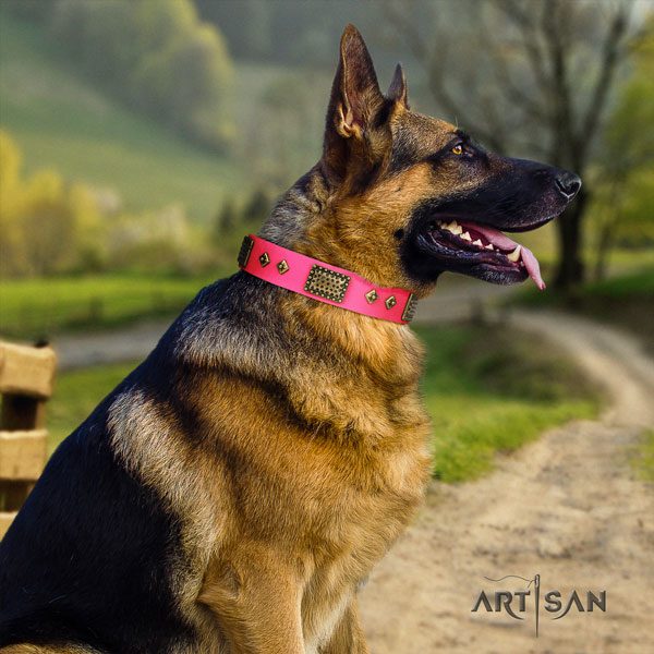 German Shepherd full grain genuine leather dog collar with studs for your stylish dog