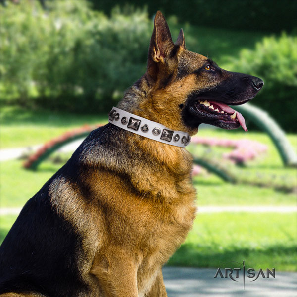 German Shepherd natural genuine leather dog collar with studs for your beautiful four-legged friend