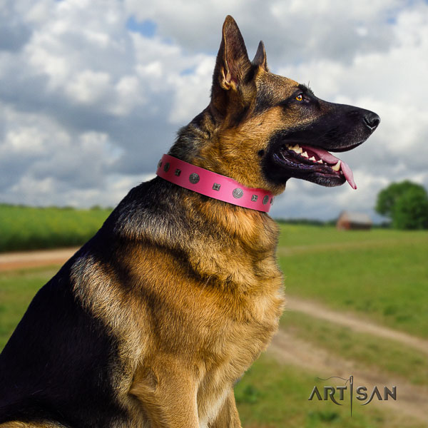 German Shepherd easy adjustable full grain natural leather dog collar with significant embellishments