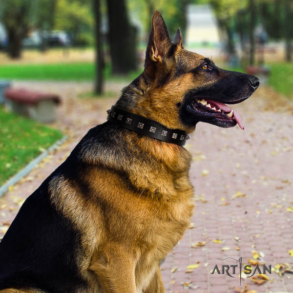 German Shepherd unusual genuine leather collar with studs for your dog
