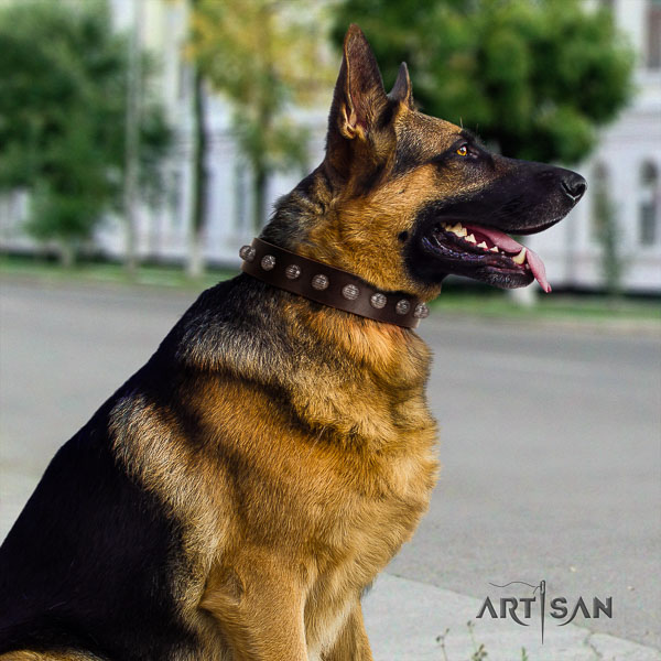 German Shepherd stylish natural genuine leather collar with embellishments for your four-legged friend