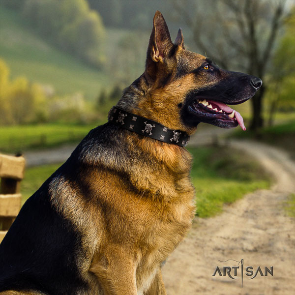 German Shepherd unusual full grain natural leather collar with adornments for your pet