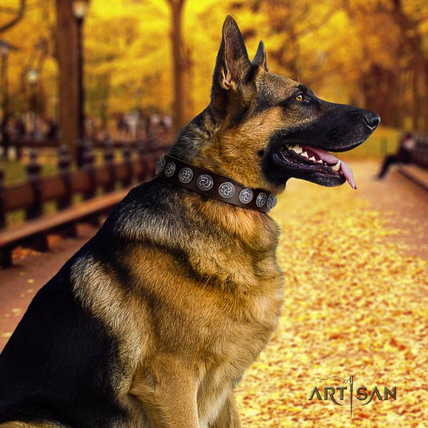 German Shepherd easy wearing full grain natural leather dog collar with amazing decorations