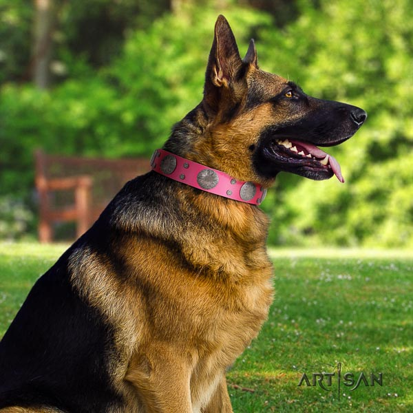 German Shepherd easy wearing full grain natural leather dog collar with stylish design adornments