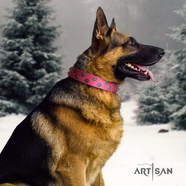 German Shepherd extraordinary full grain genuine leather collar with embellishments for your pet
