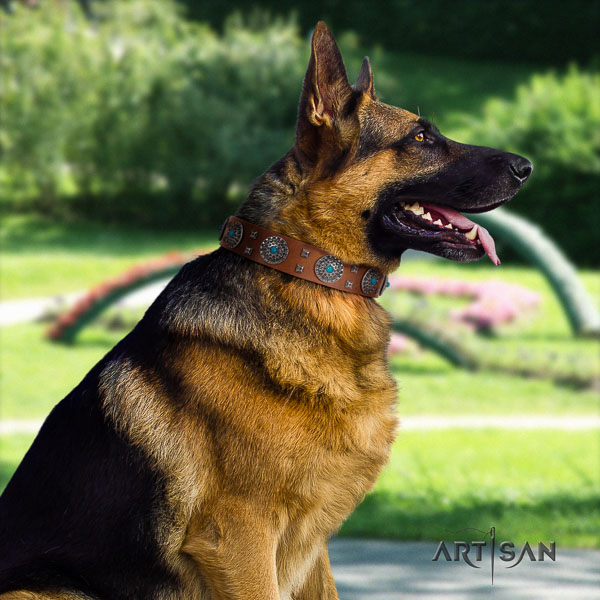 German Shepherd stylish design genuine leather collar with studs for your four-legged friend