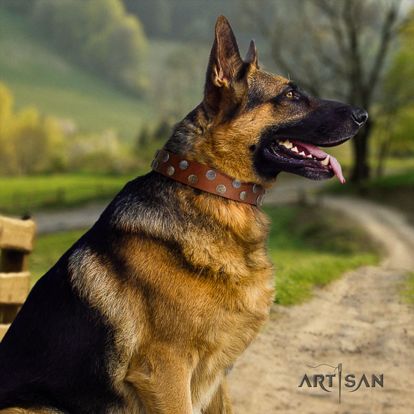 German Shepherd best quality full grain natural leather dog collar with stunning decorations