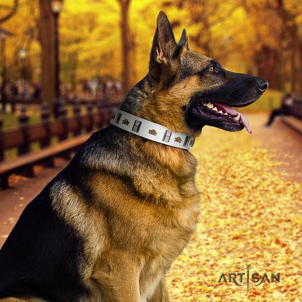 German Shepherd top quality full grain natural leather dog collar with unusual studs