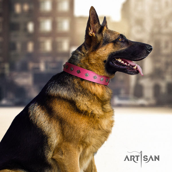 German Shepherd stunning genuine leather collar with studs for your dog