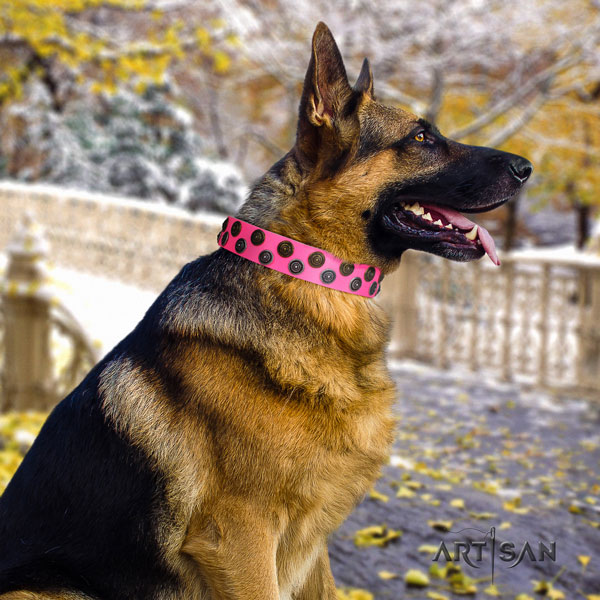 German Shepherd full grain genuine leather dog collar with adornments for your beautiful four-legged friend