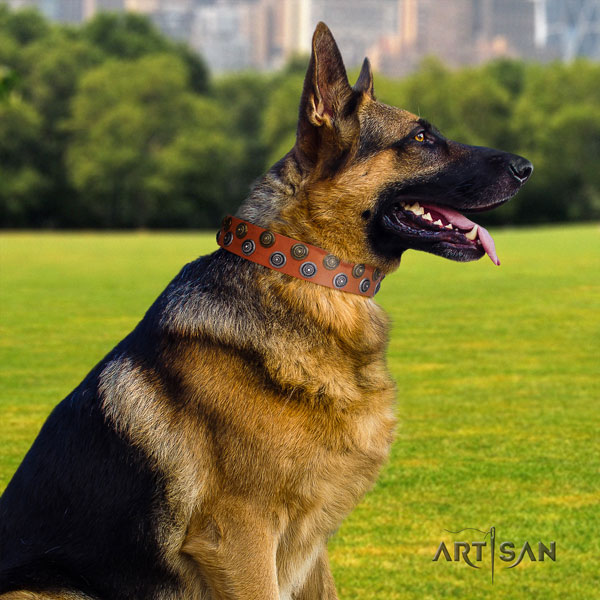 German Shepherd full grain leather dog collar with embellishments for your attractive doggie