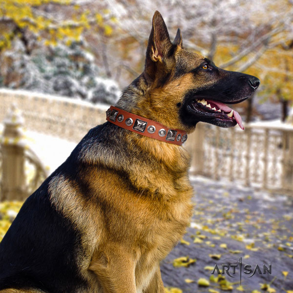 German Shepherd natural genuine leather dog collar with adornments for your impressive dog