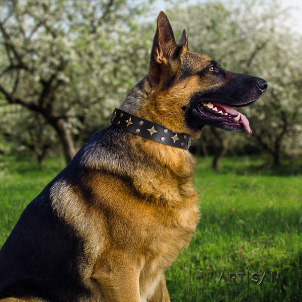 German Shepherd full grain natural leather dog collar with adornments for your handsome pet