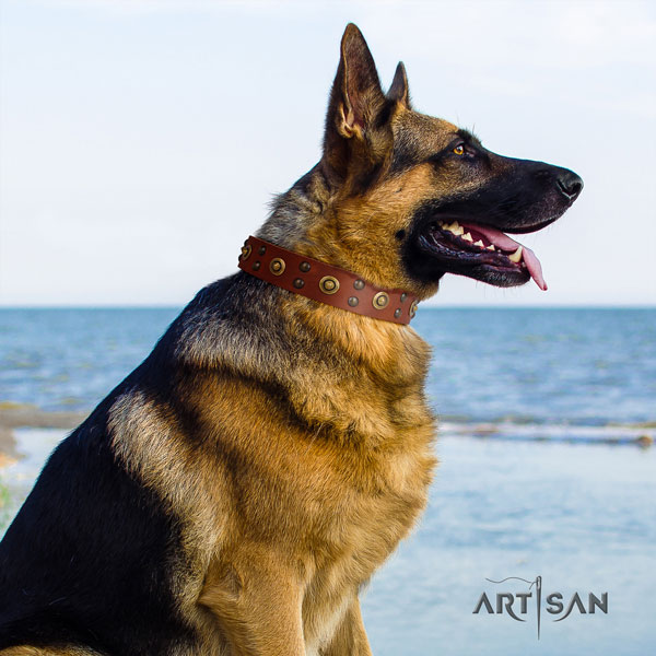German Shepherd full grain natural leather dog collar with adornments for your impressive pet
