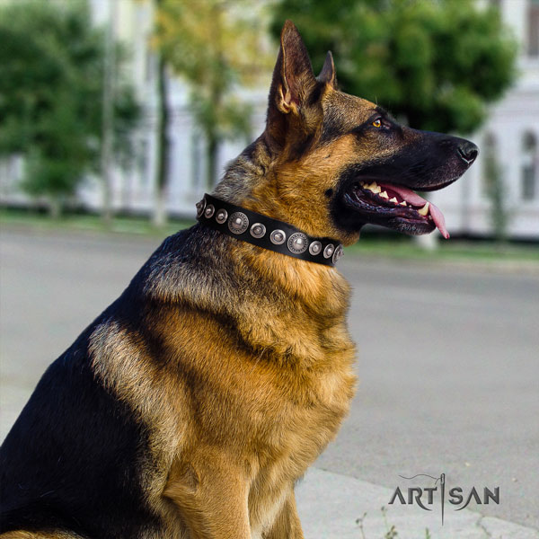German Shepherd natural genuine leather dog collar with studs for your attractive pet