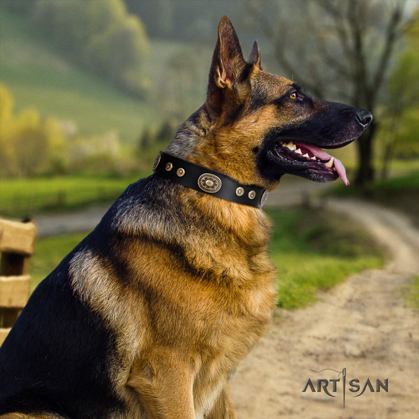 German Shepherd natural genuine leather dog collar with embellishments for your stylish dog